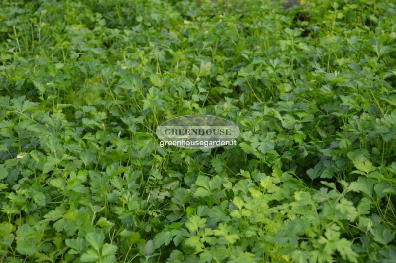 orto On piante da orto online
