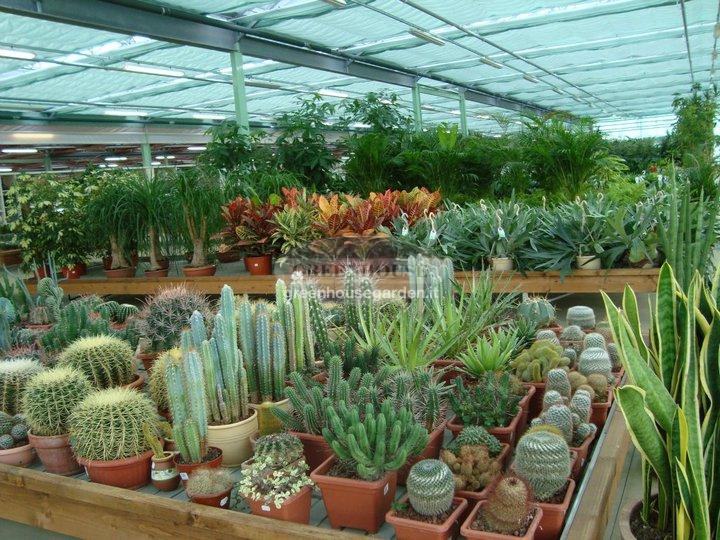 Vendita piante da interno a Pistoia, Piante da ...