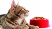 Settimana Promozionale Del Gatto