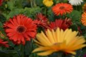 EsPlOsIoNe di colori - Primavera/Estate