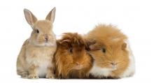 Settimana Promozionale Piccoli Animali